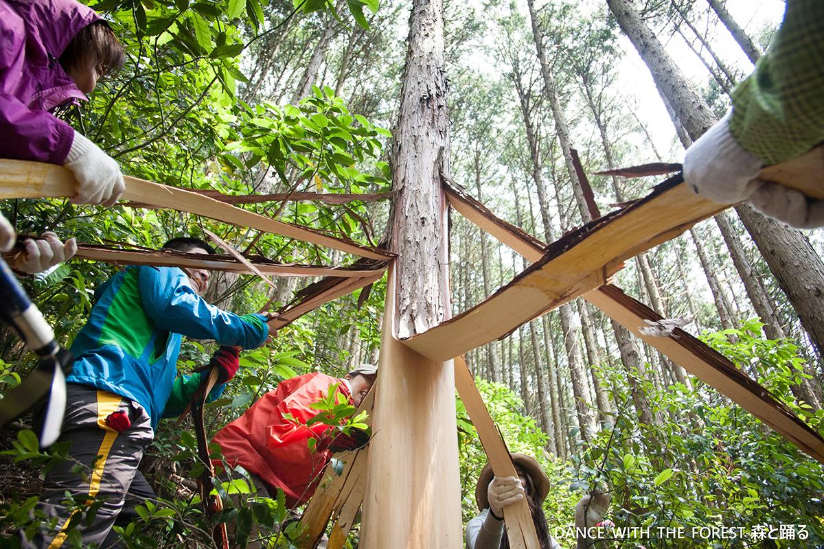 高尾の森の森と踊るとokaikosanの木工の商品のお知らせの画像