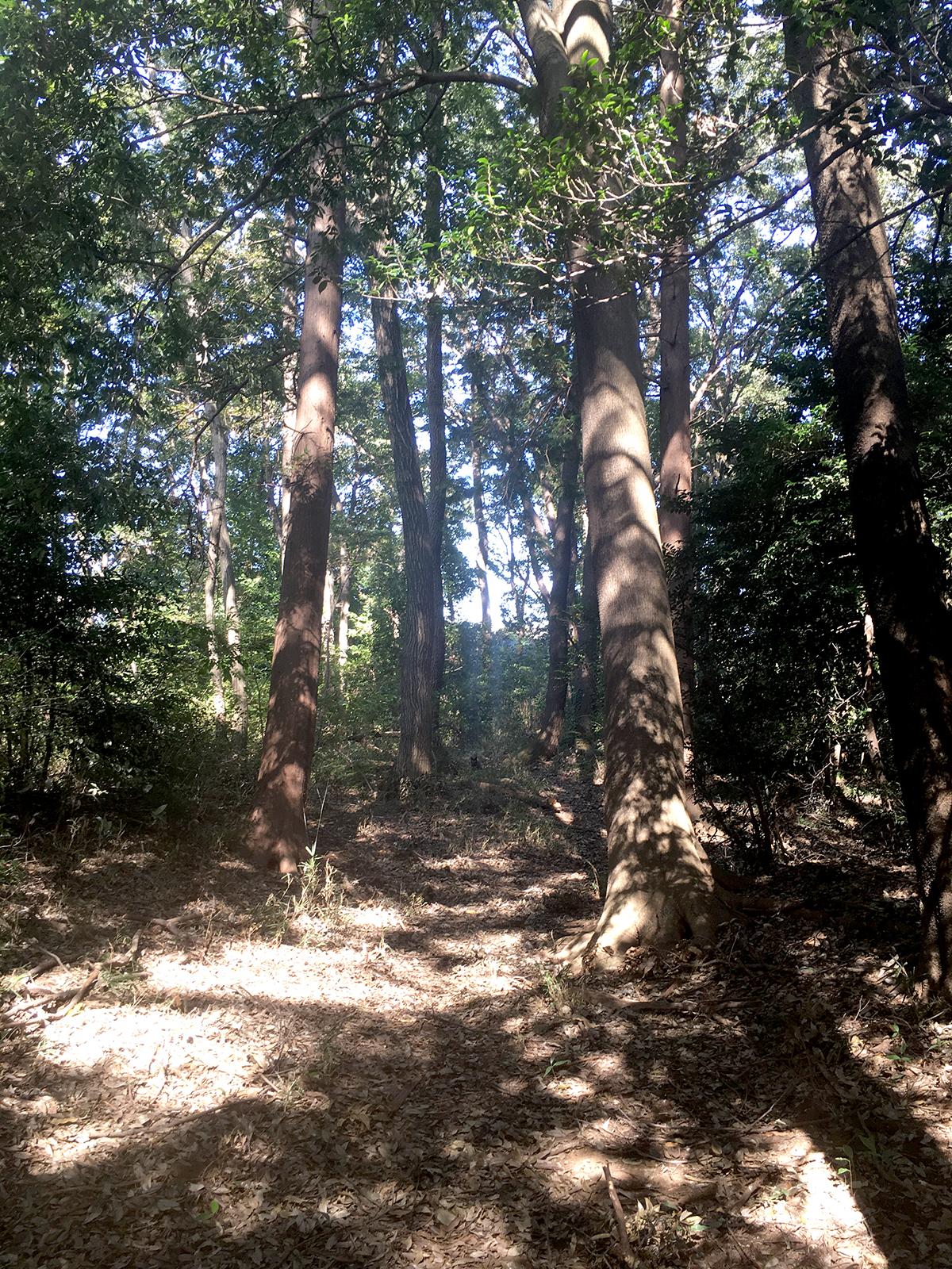 森の中にいる黒猫の画像